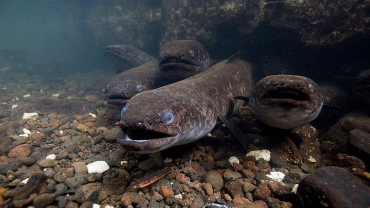 Along-the-river-Polynesias-sacred-eels.jpg