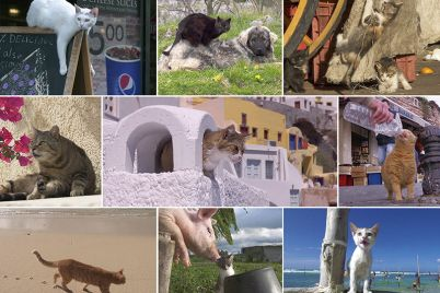 Cat_Life_01.jpg