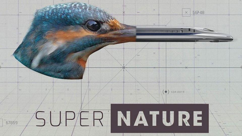 Supernature-img.jpg